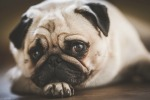 Are You Accidentally Hurting Your Dog - GmaNsWorlD.com